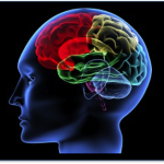 Qué es Neuromarketing y cómo utilizarlo en los negocios